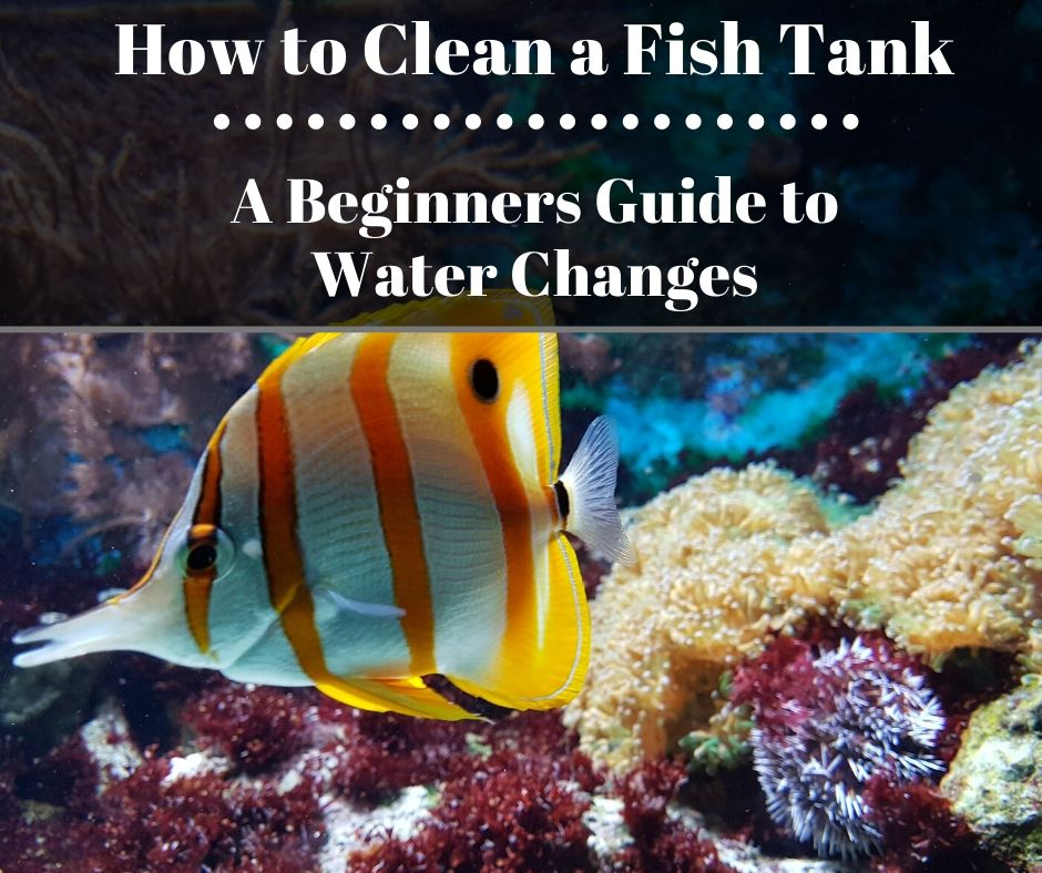 Reef Stable - Saltwater Fish Tank Blog - How to Clean a Fish Tank - Beginners Guide to Saltwater Fish Tanks