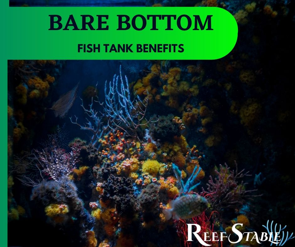 Reef Stable - Saltwater Fish Tank Blog - Bare Bottom Fish Tank - Bare Bottom Benefits