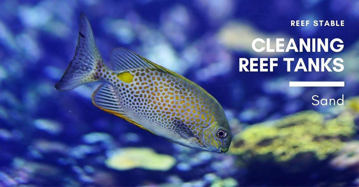Reef Stable - Saltwater Fish Tank Blog - Cleaning Reef Tank - Sand
