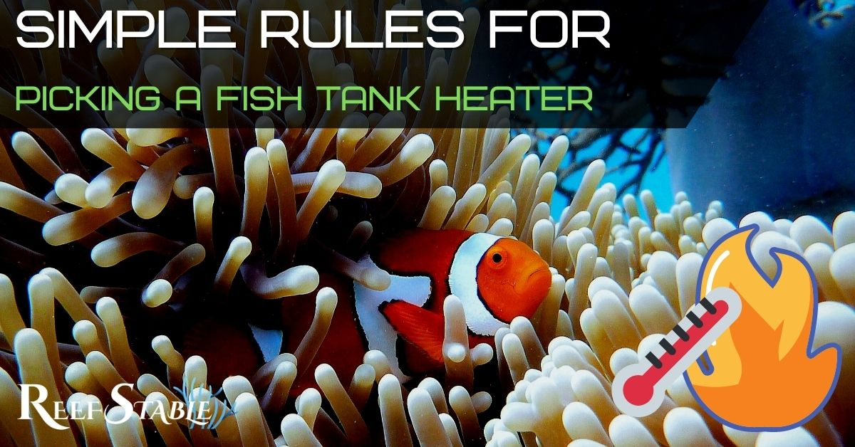 Reef Stable - Saltwater Fish Tank Blog - Saltwater Aquarium Heater Guide