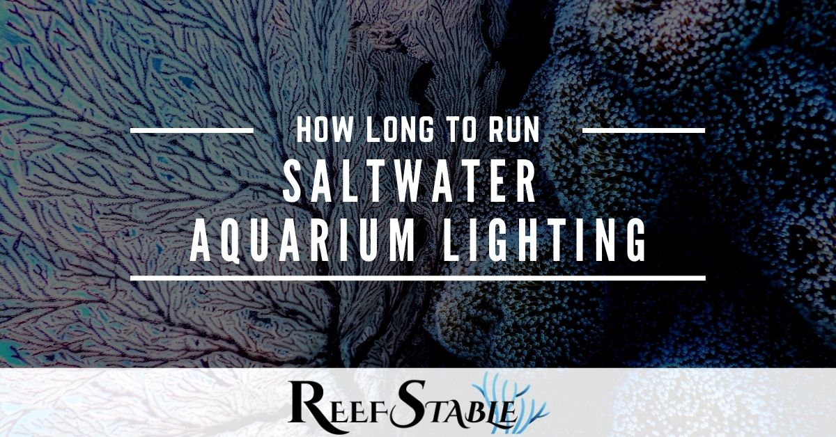Reef Stable - Saltwater Fish Tank Blog - How Long to Run Reef Aquarium Lights