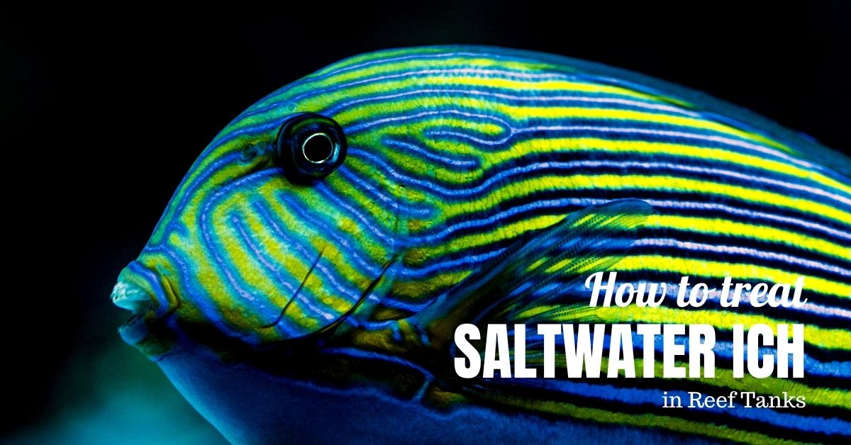 Reef Stable - Saltwater Fish Tank Blog - Saltwater Ich Treatment in Reef Tanks