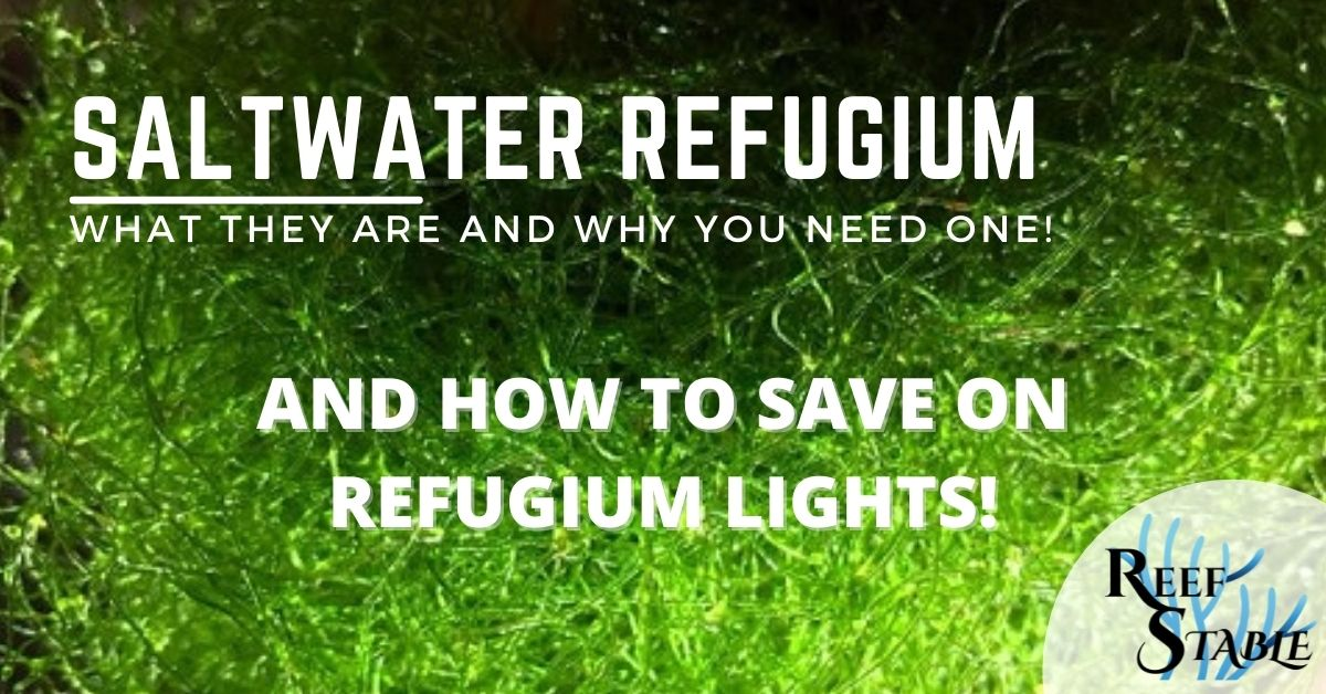 Reef Stable - Saltwater Fish Tank Blog - Saltwater Refugium - What are They and Do I need One?